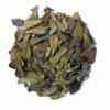 Uva Ursi Dried Herb
