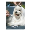 Pets Groom Professional Poster Maltese