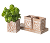 Garden Traidcraft Butterfly Terracotta Herb Pots - Set of 3