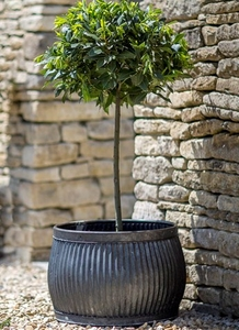 Shallow Round Vence Planter,  Large H33cm - Steel