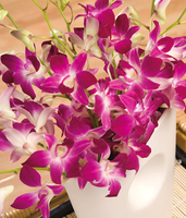 Flowers  - Oriental Orchids Large