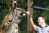 Other Experiences Feed the Big Cats at Paradise Wildlife Park