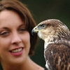 Falconry Experience - Full Day